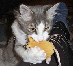 Brody the Cat
